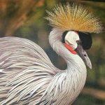 Животные в Хайфском зоопарке и на выставке картин художников и фотографов