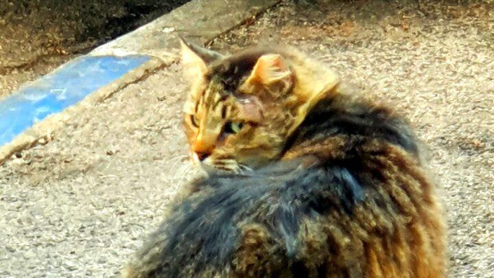 Хайфские кошки. В помощь братьям меньшим